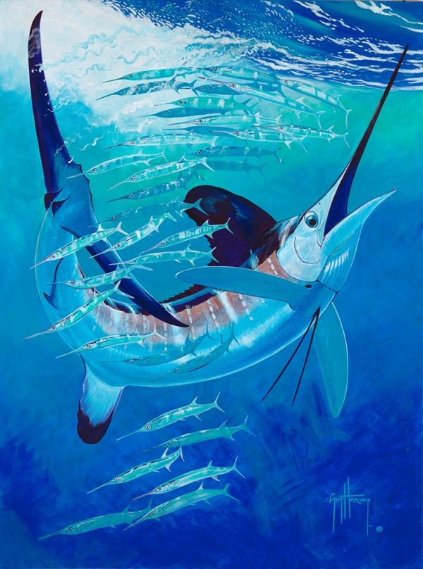 A single white marlin takes on needlefish | Marine life ...
