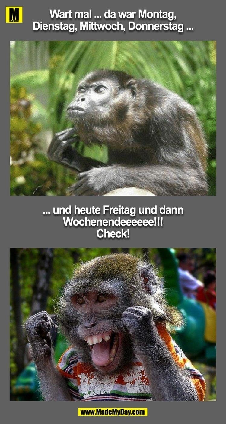 Pin von Sabine Schulze auf Lustiges | Freitag lustig ...