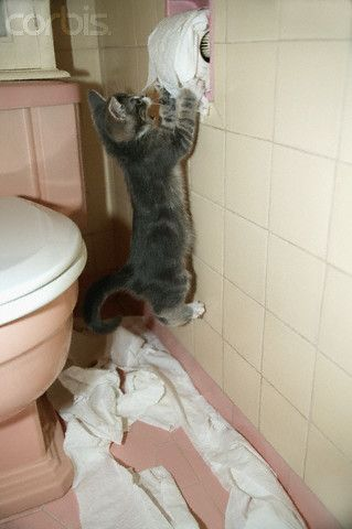 Kitten Playing With Toilet Paper Roll 42 15395460 Rights Managed Stock Photo Corbis Kittens Funny Kittens Playing Bad Cats