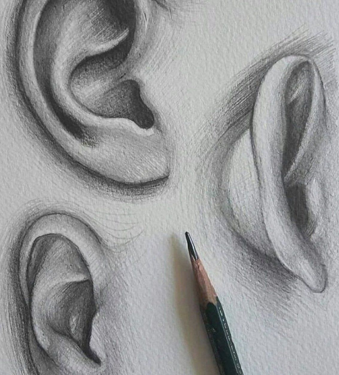 Drawing ears     -  Drawing ears      - #drawing #Ears #FineArt #OilPaintings #PencilPortrait