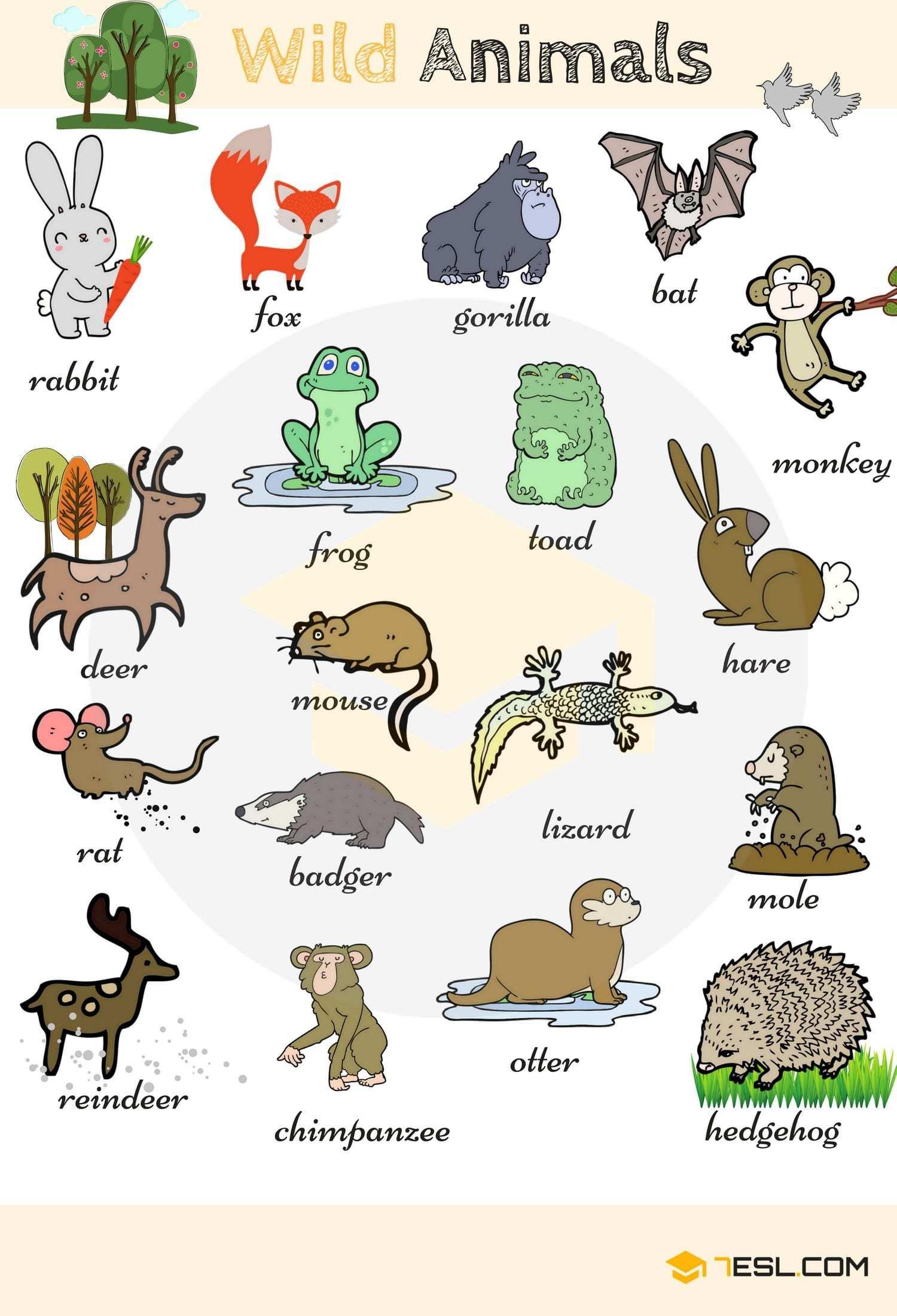 Wild Animal Vocabulary in English Animales en ingles