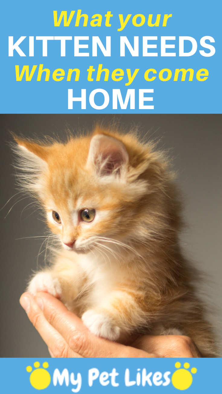 A Few Must Haves For When You Bring That New Kitten Home Kitten Adoption Raising Kittens Cat Care