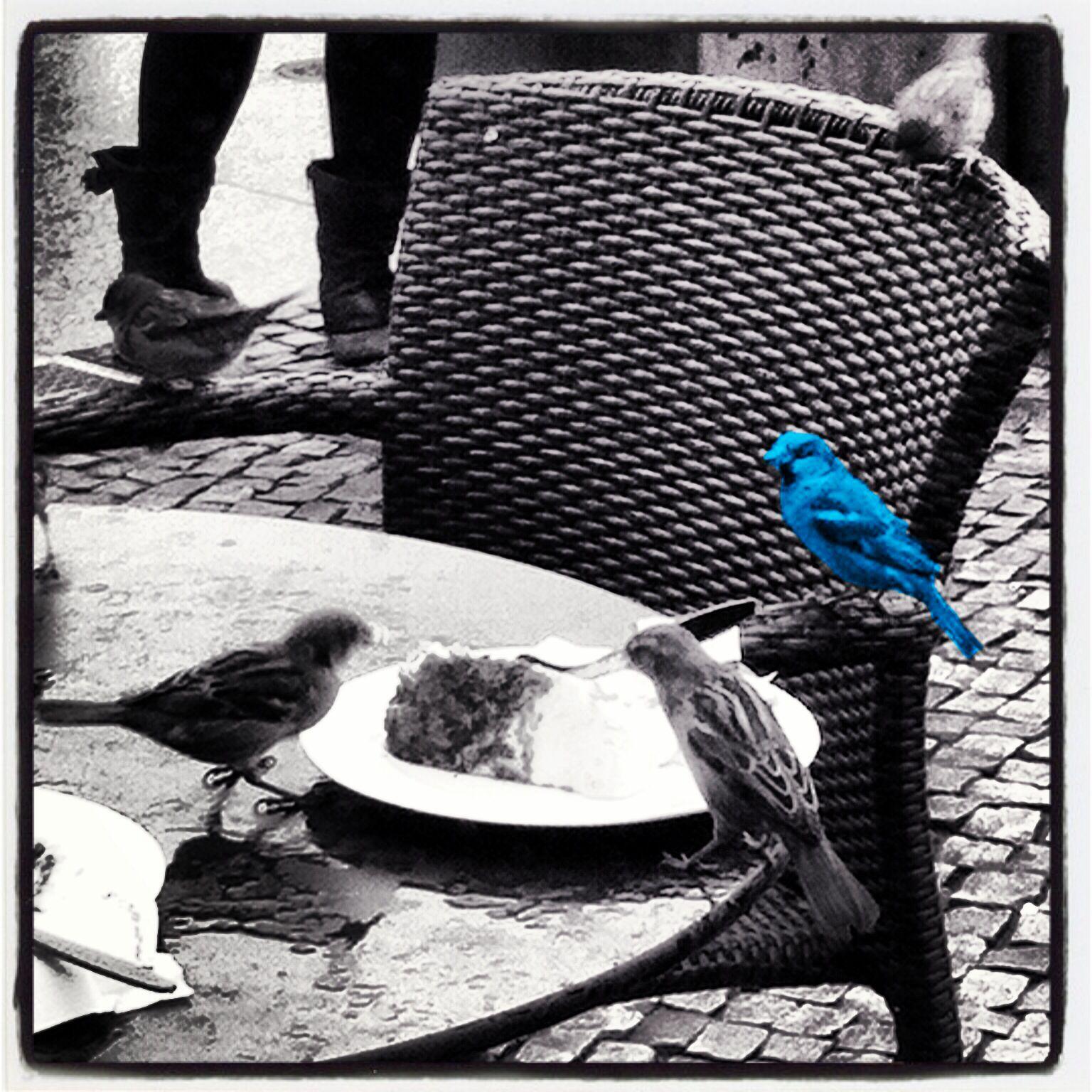 Terrasje pikken #vogeltjes