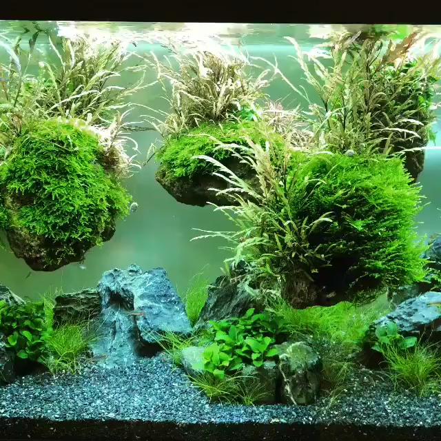 Freshwater Aquascape Plants