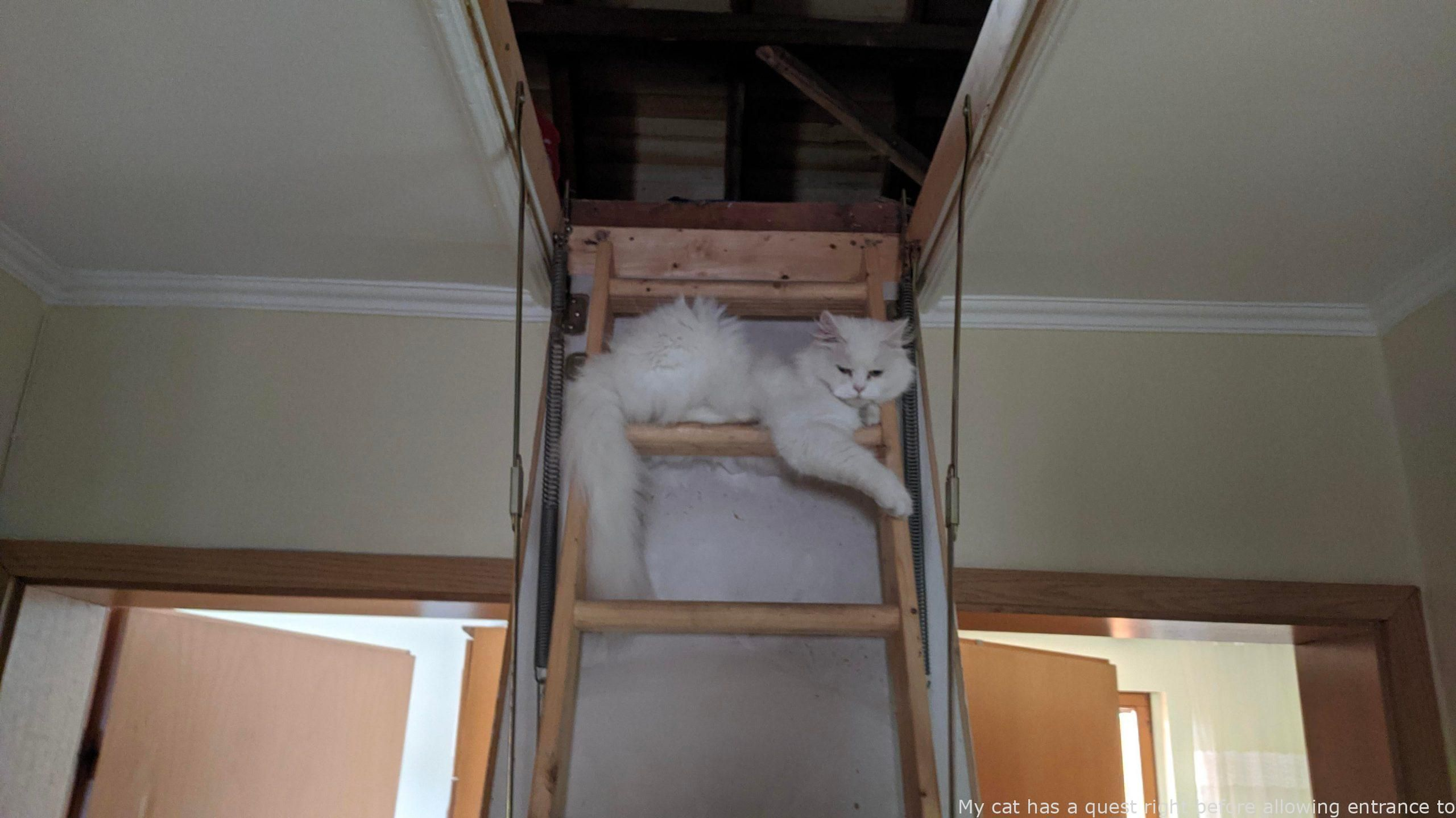 Animals My Cat Has A Quest Right Before Allowing Entrance To The Attic Last In 2020 Beauty Animals Cute Animal Memes Cuddly Animals