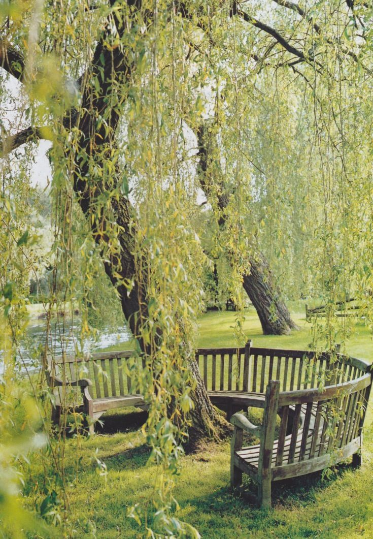 Weeping willows have always been a favorite of mine