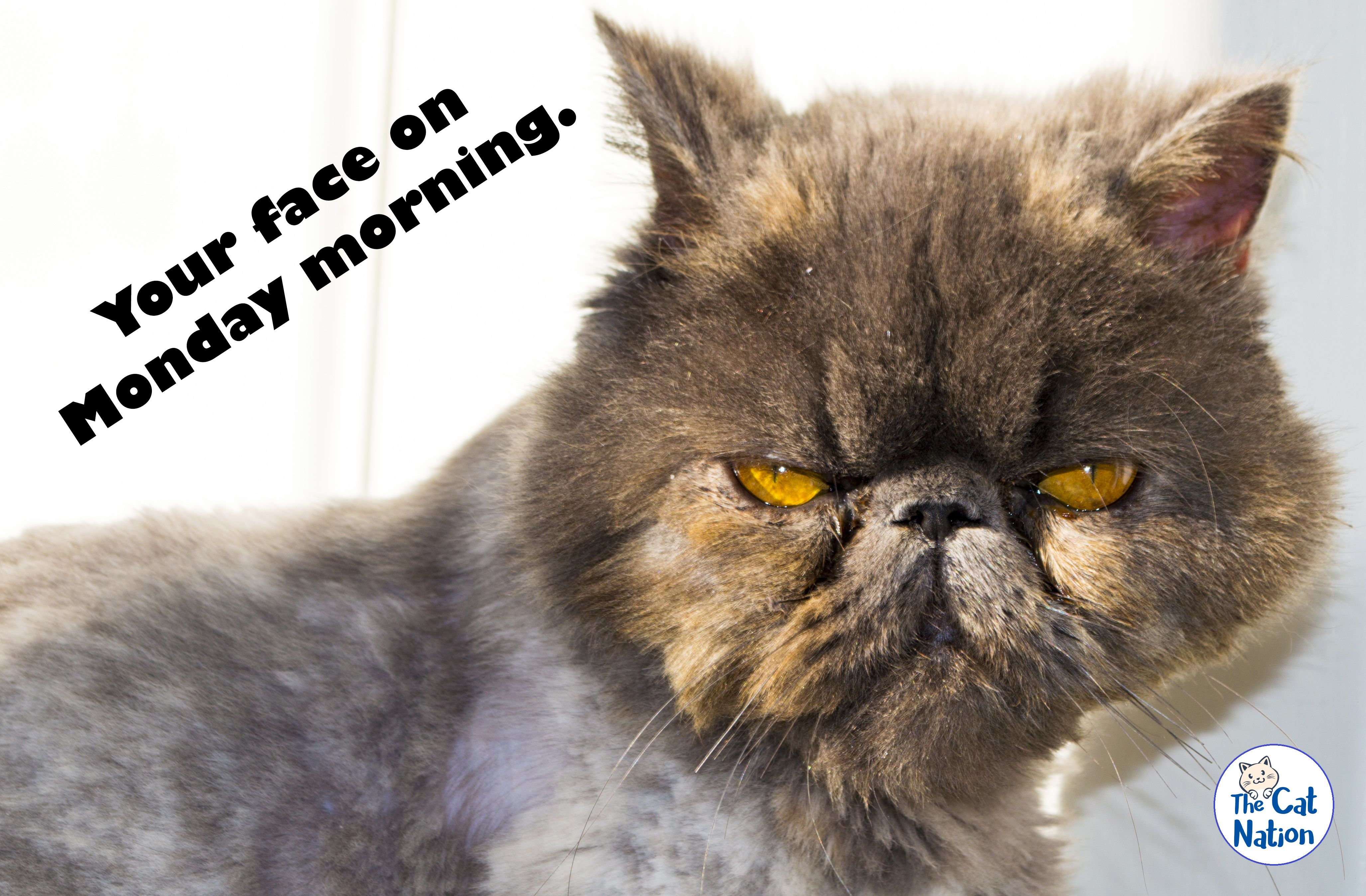 We All Know That Feeling Cat Kitten Kitty Cats Kittens Pet Cats Pets Catmemes Meme Cats Persian Cat Abyssinian Cats