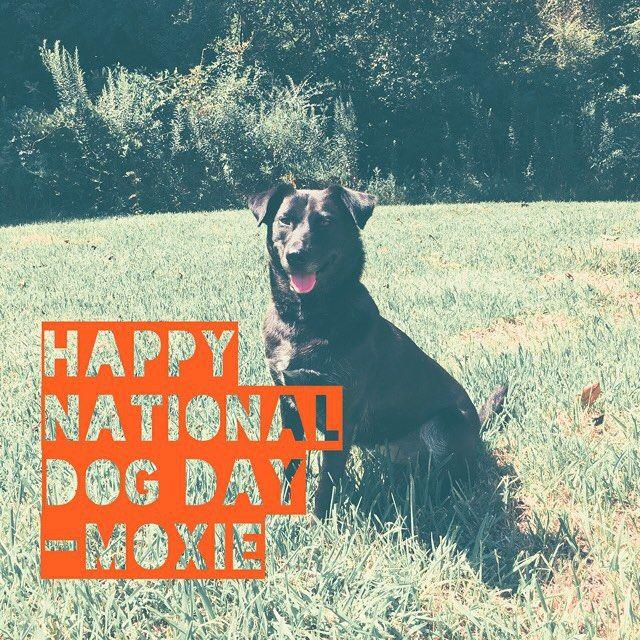 #nationaldogday