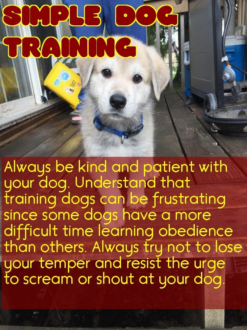 Great Tips About Dogs That Anyone Can Use Easiest Dogs To Train
