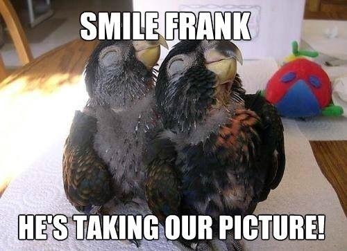 Smile  :) Parrot #Animal #Humor
