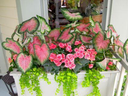 Breast Cancer Gardening Shade Container #shadecontainergardenideas