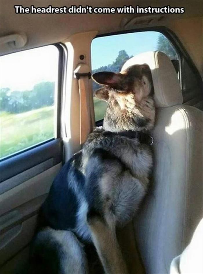 23 Dogs Who've Out-Dogged Themselves #funnyanimalpictures