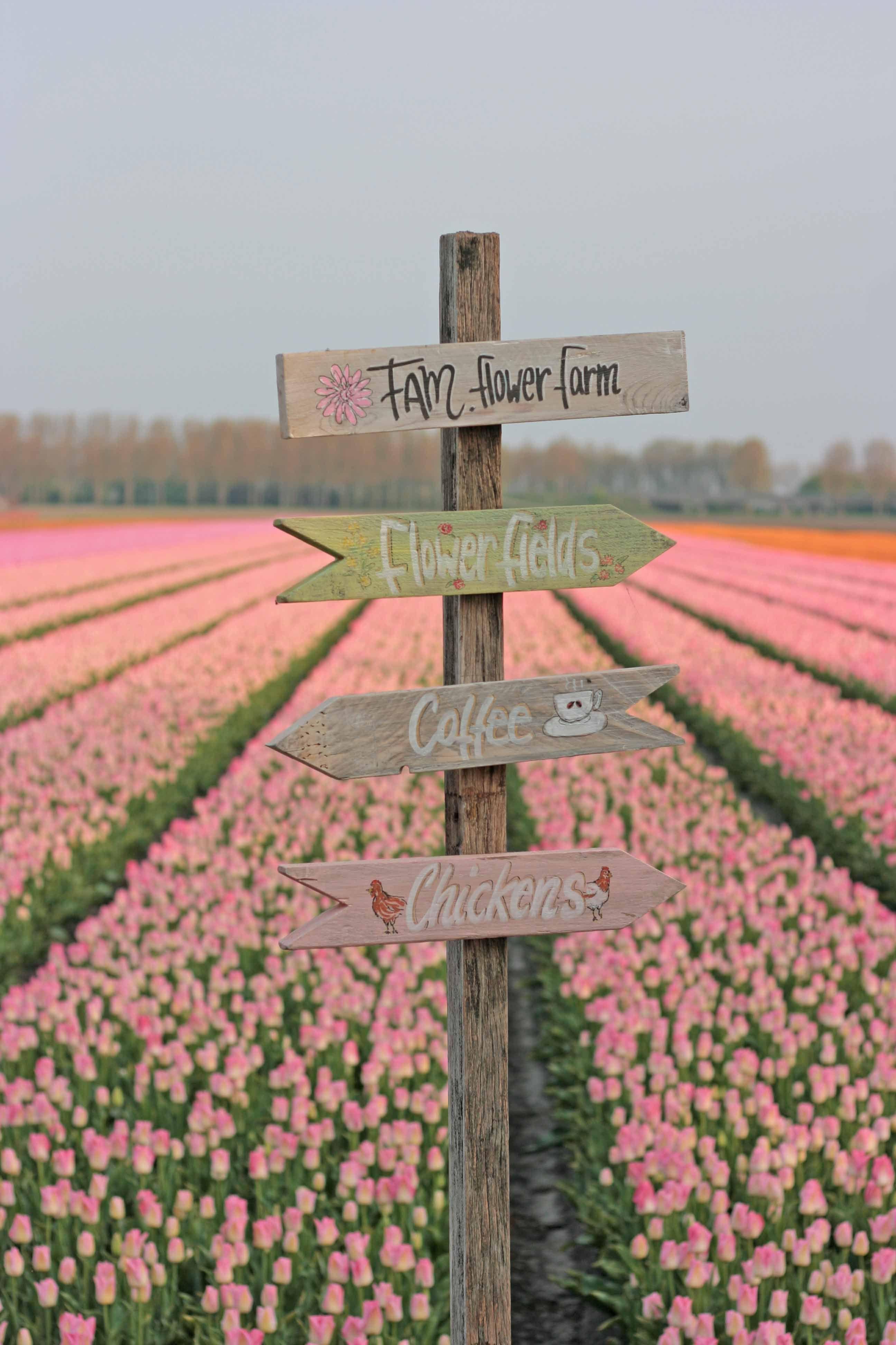 Pin On Tulip Bulbs By Fam Flower Farm