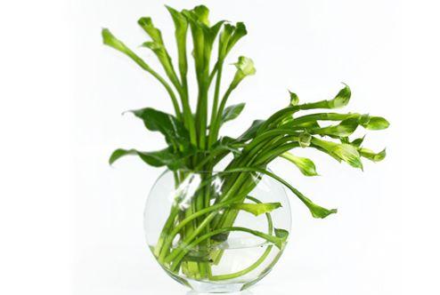 Verde que te quero - Arranjoseflores - Flores-e-presentes - Arranjos-florais