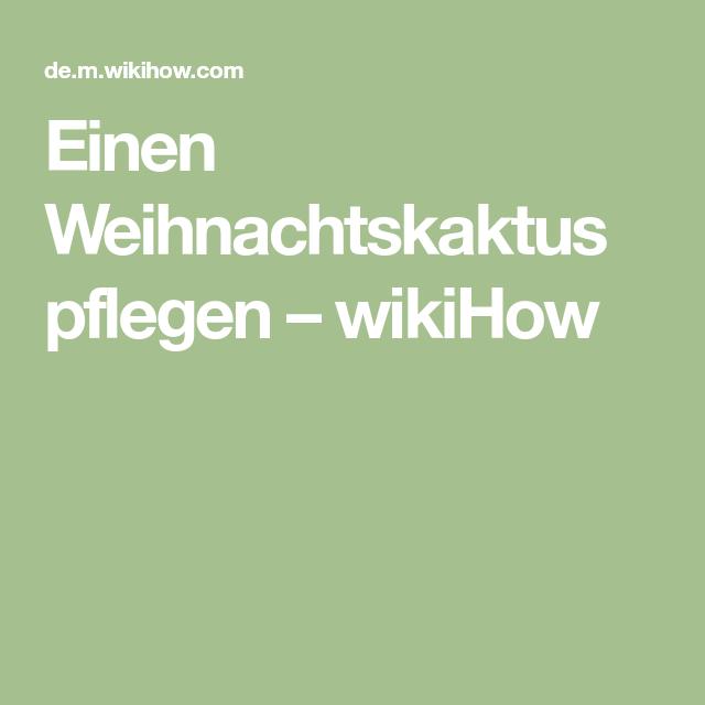 Einen Weihnachtskaktus pflegen – wikiHow
