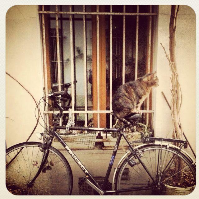 cat&bicycle