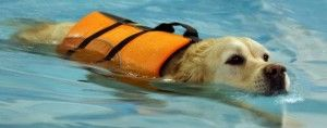 Pool4paws Canine Hydrotherapy And Rehabilitation As This Photo