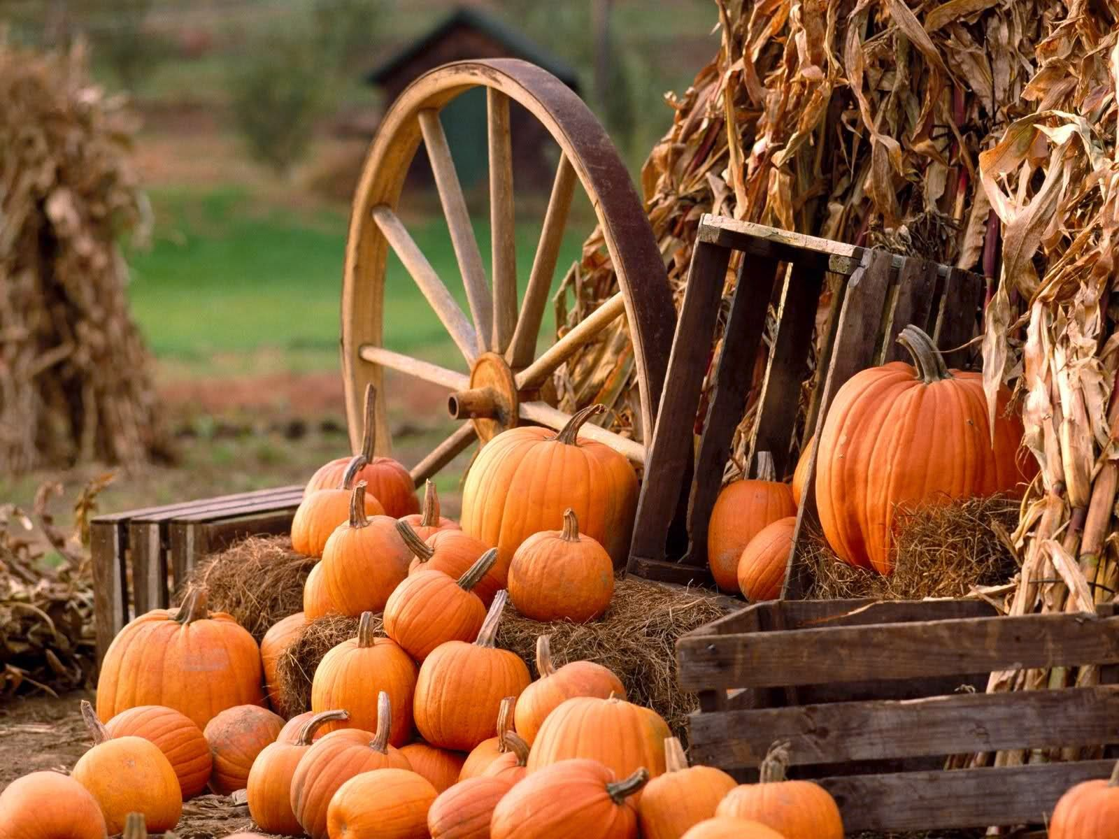 Autumn Wallpaper Pumpkin Country Theme Fall Pumpkins Fall Harvest Fall Wallpaper