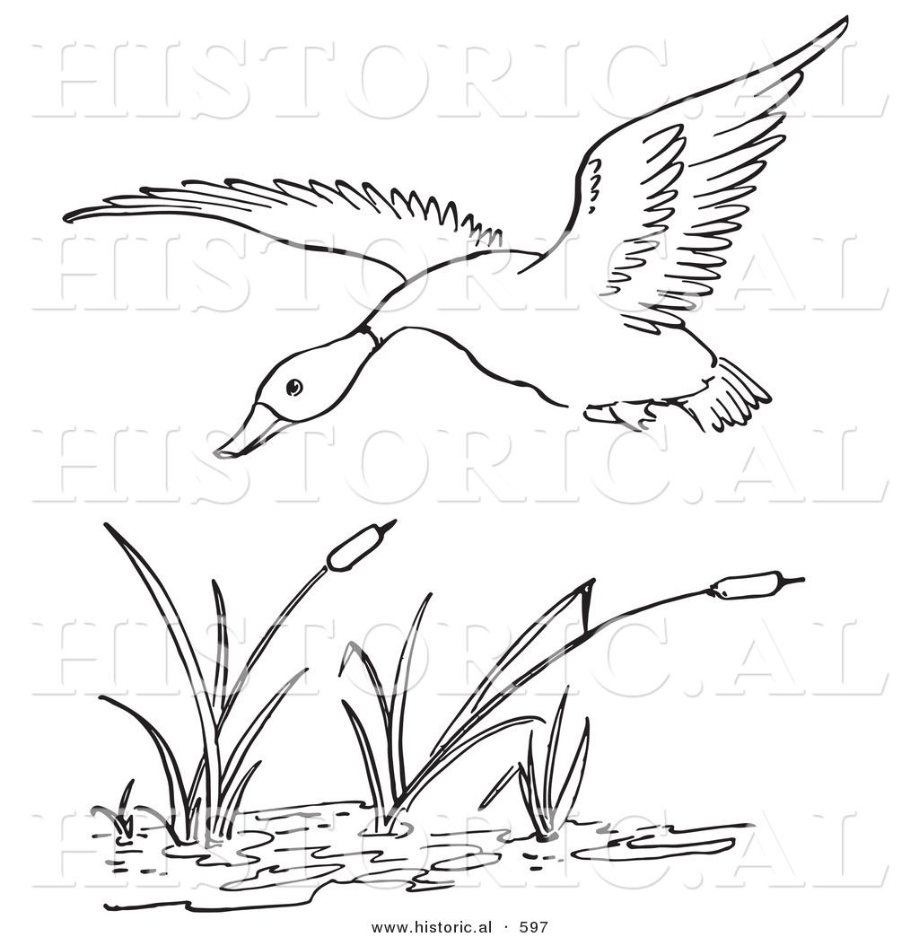 Wetlands Habitat Coloring Page