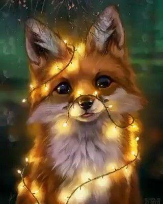 Fox 🦊