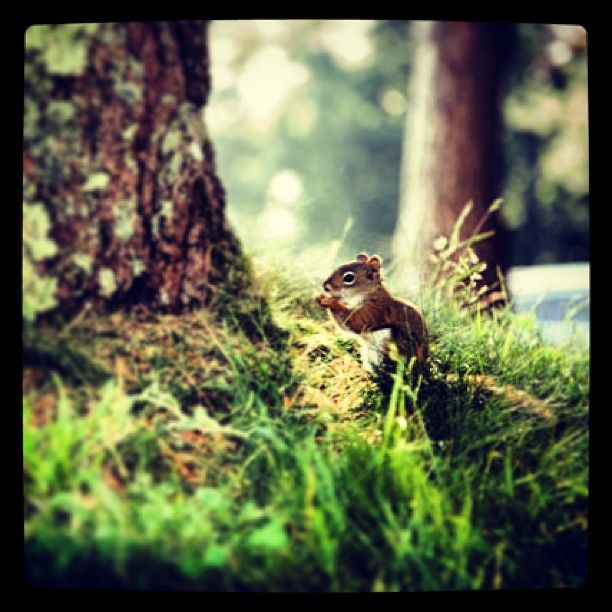 It's almost #Chipmunk season! #NovaScotia #Resort #Summer #Wildlife #Animals #DigbyPines #Vacation #VisitNovaScotia #PicoftheDay