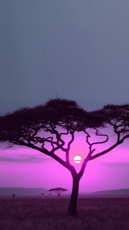 African Savana Sunset Pink IPhone 6 Wallpaper