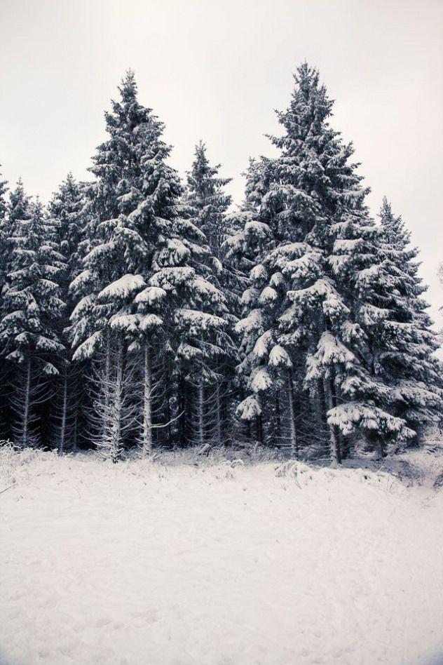?Traumhafte Winterlandschaft: So schön ist das Sauerland im Winter (Teil 1) - Hennen Arts #sauerland #fotografbochum #kälte #schneeflocken #bäume #outdoorwood #Ästeweihnachtlichdekorieren ?Traumhafte Winterlandschaft: So schön ist das Sauerland im Winter (Teil 1) - Hennen Arts #sauerland #fotografbochum #kälte #schneeflocken #bäume #outdoorwood #Ästeweihnachtlichdekorieren