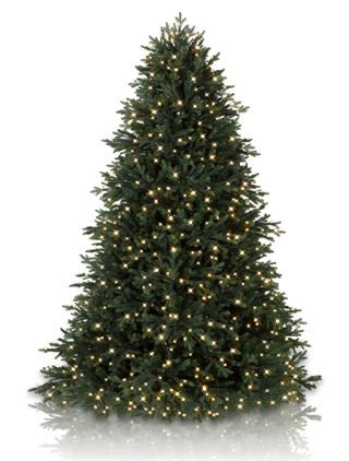 Norway Spruce Tree Realistic Christmas Trees Norway Spruce
