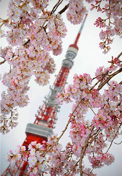 Pin By Eri Petite On Ilove Cherry Blossom Japan Tokyo Tower Japan Travel