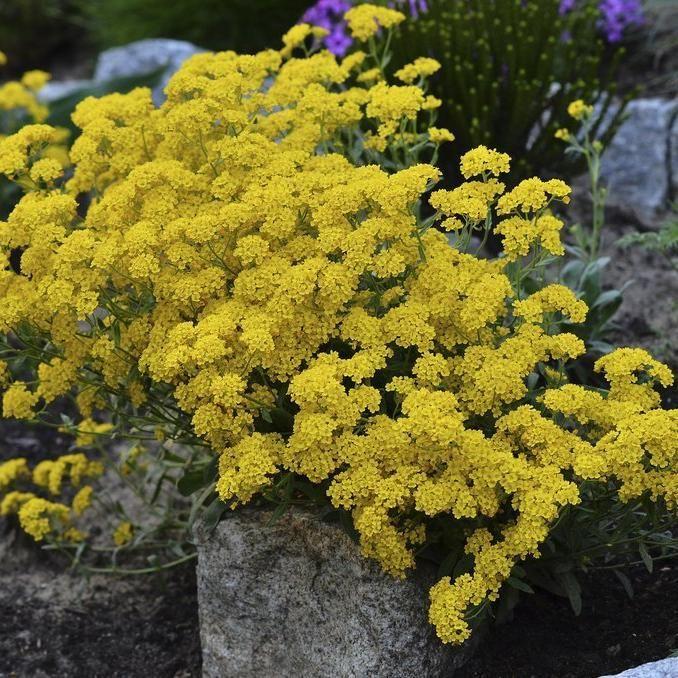 Épinglé sur Plantes, fleurs, arbres et arbustes