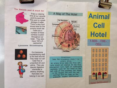 Cell Analogy Brochure Project Pictures Cell Project Ideas Cell