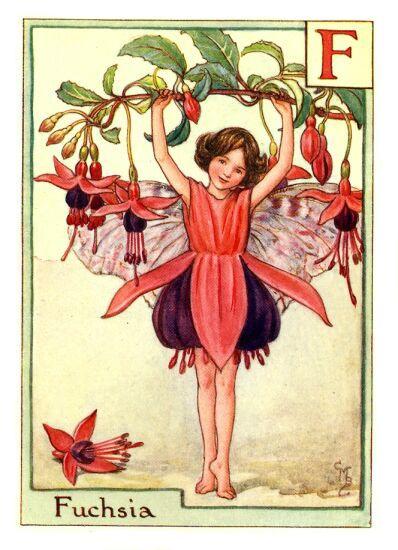 Fuchsia Flower Fairies Fairy Art Flower Fairies Vintage Fairies