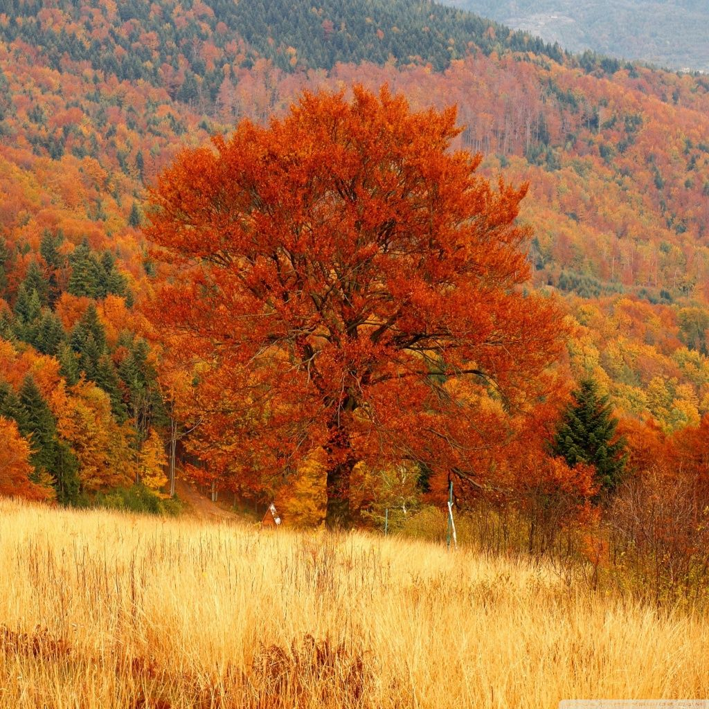 autumn forest | Autumn Forest 4 HD iPad Wallpaper #59157