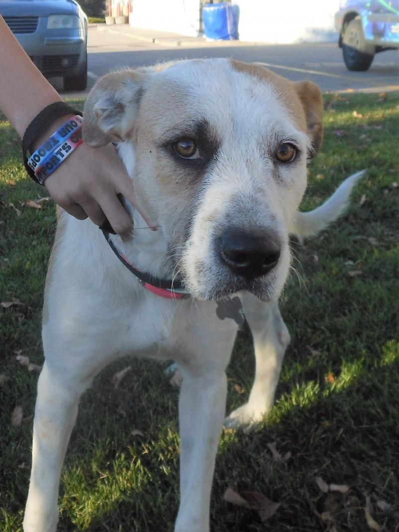 Adopt luna on petfinder dogs of the world doggy dogs