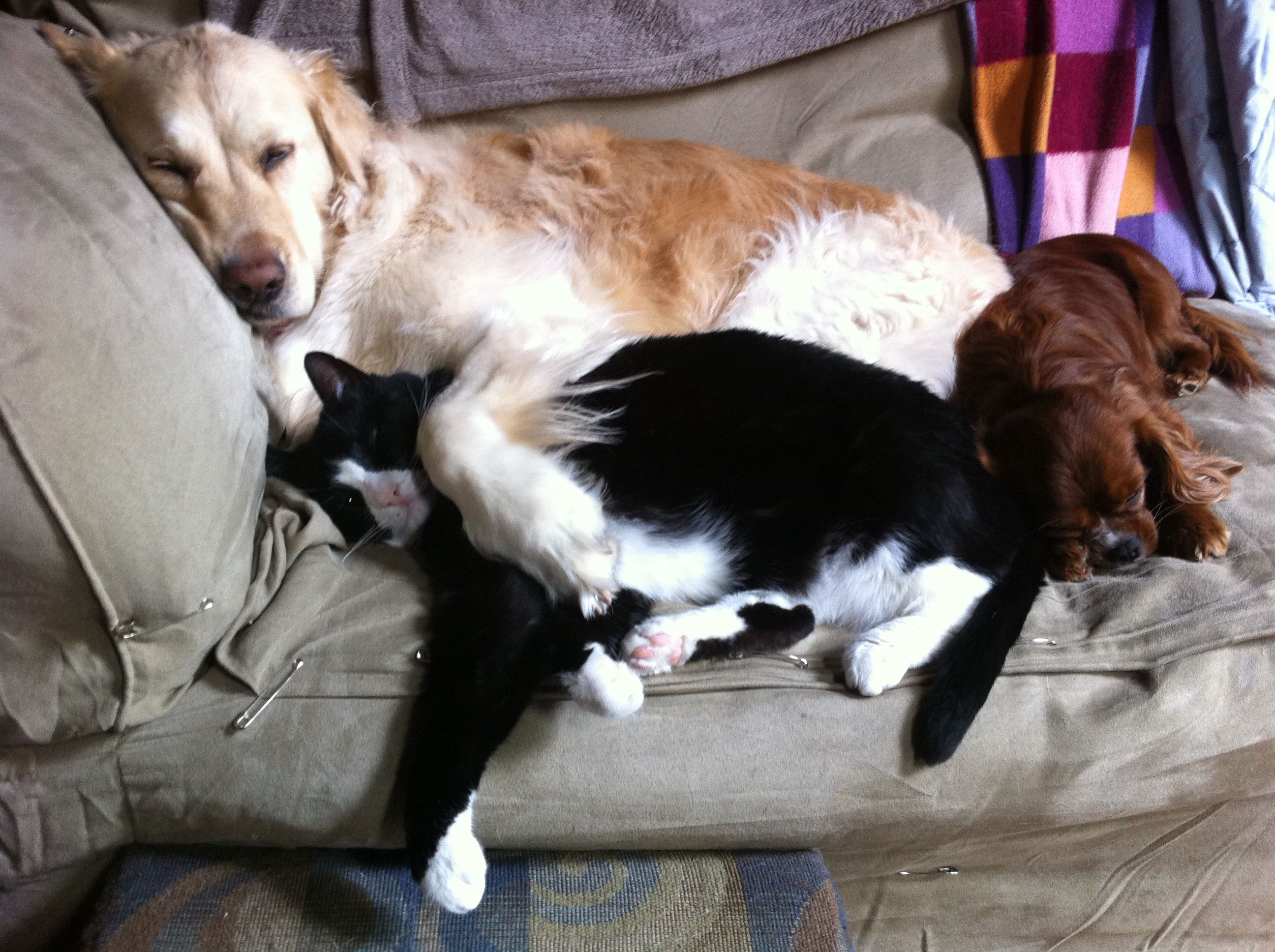 Our Critter Pile Maria Our Golden Retriever With Her Arm Around