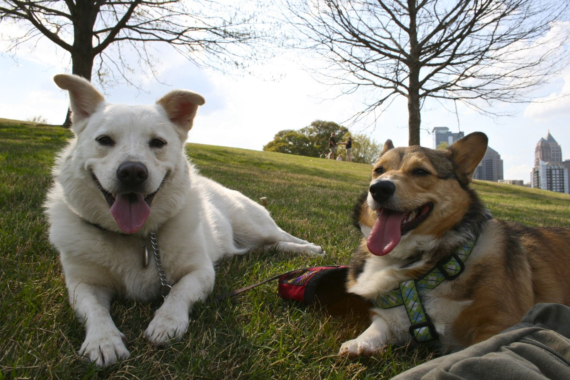 You have long legs, but that's okay. We can still be friends and it will be wondaful!!!!!! #corgi