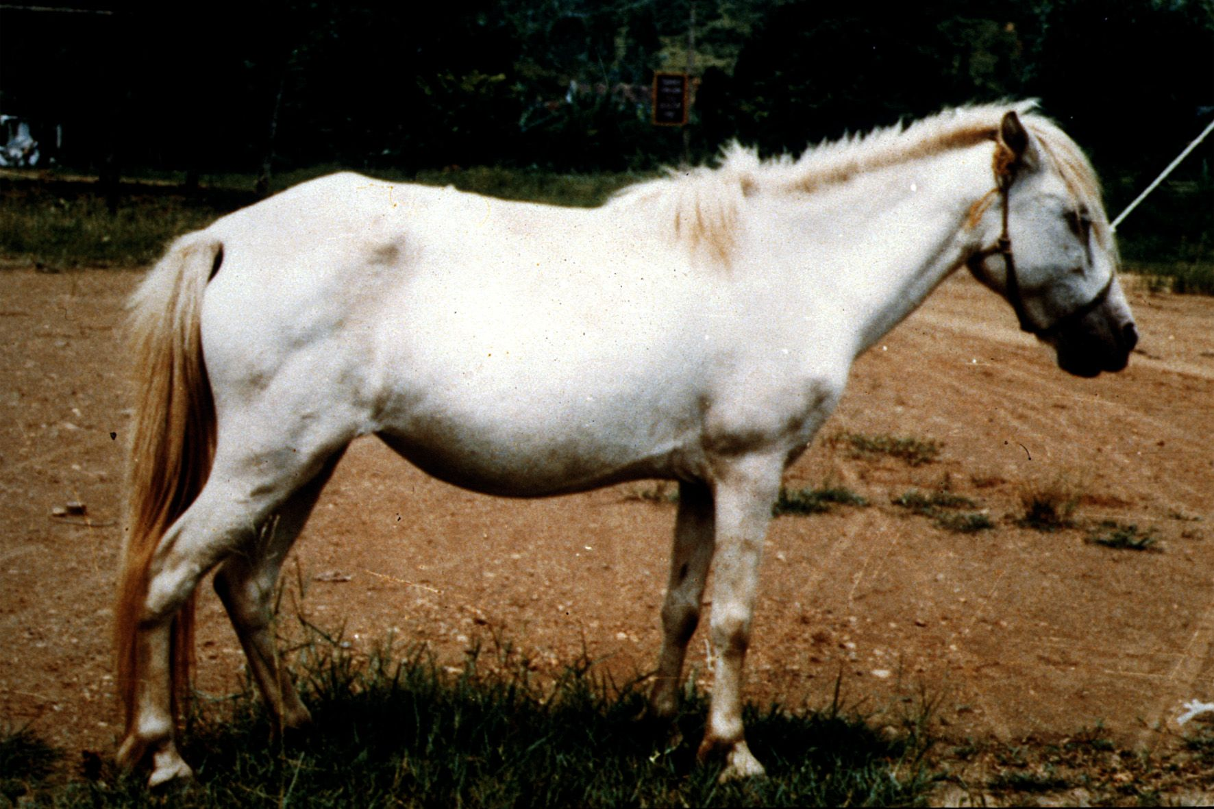 Pictures horse with z a breeds