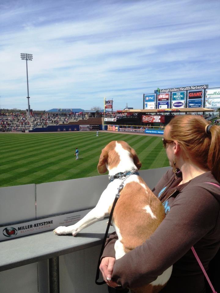 Baseball Beagle Beagle Baseball Dog Silly Animals Beagle