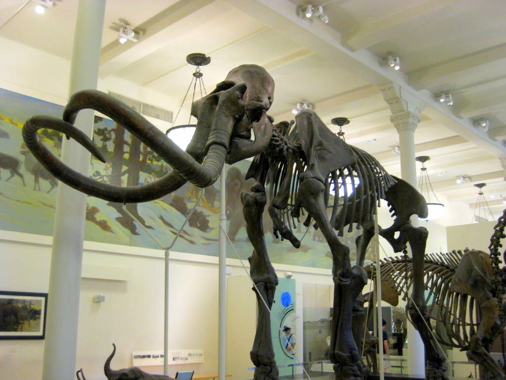 Museum Of Natural History New York Discount Tickets