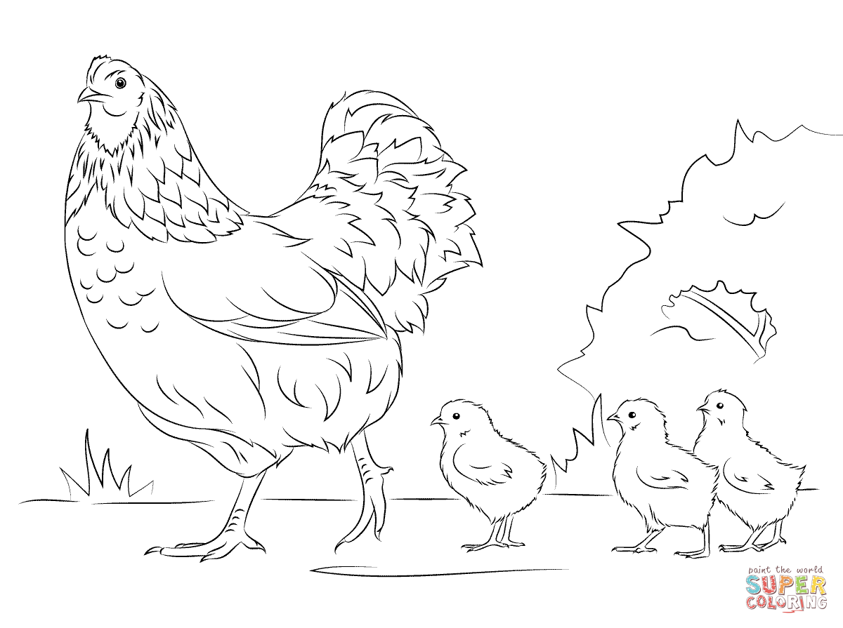 Drawing Of Chicken And 3 Chicks