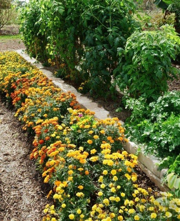 28 Companion Planting Combinations To Grow The Tastiest 640 x 480