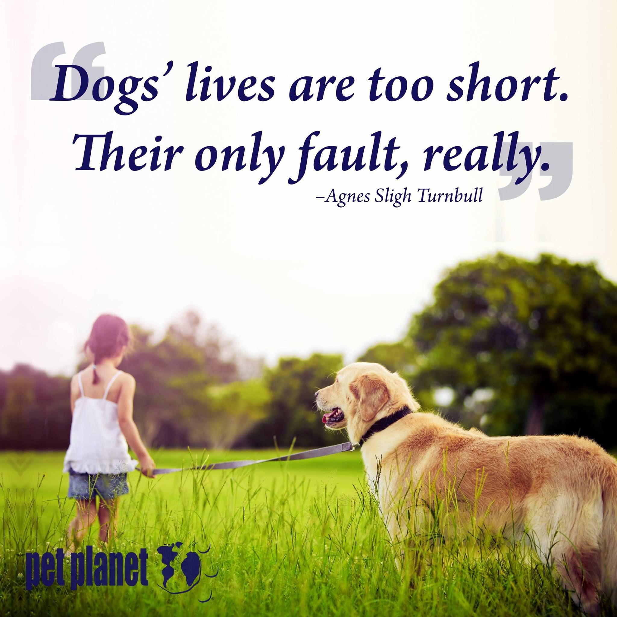 Dogs Lives Are Too Short Their Only Fault Really Agnes Sligh Turnbull Petplanethealth Petguardianship Quoteoftheday Dogs Pets Pet Store Dogs