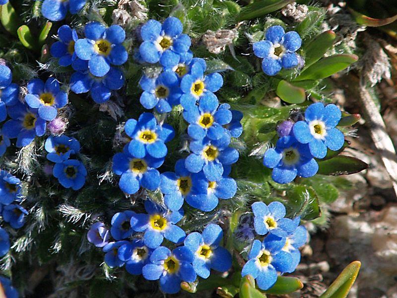 Alaska they are beautiful flowers