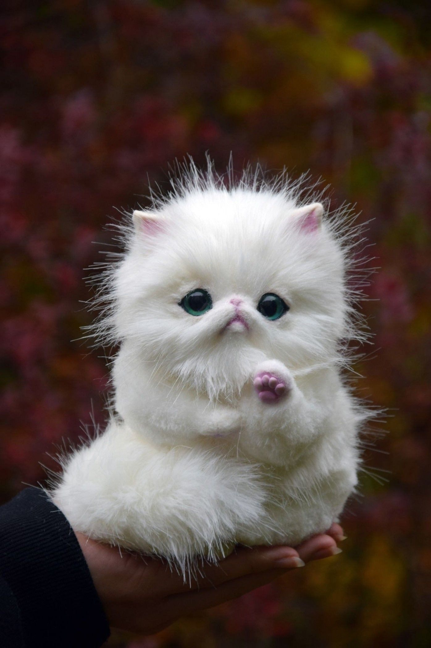 8 Cute Toy Persian in 2020 Persian kittens, Pet toys