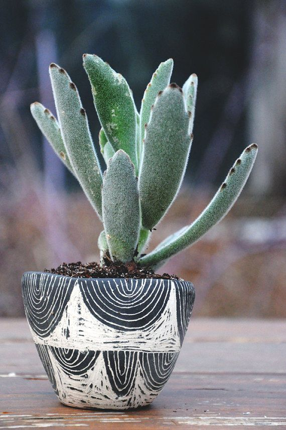 Your succulent, cactus, or other small plant will thrive in this black and ivory ceramic planter covered with hand-drawn arcs and relief carvings