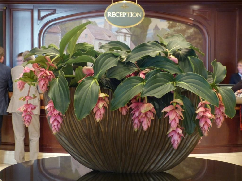 Medinilla Dolce Vita Medinilla J Adore Pinterest Discover More Ideas About Dolce Vita And