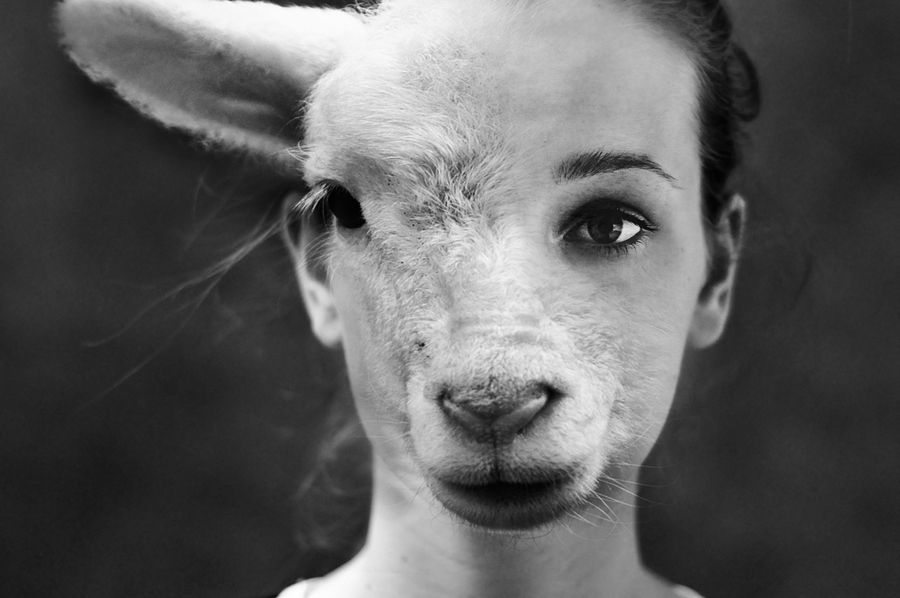 lamb-me by Laura Zalenga | 500px | Visages humains, Photographie, Oeuvre  d'art