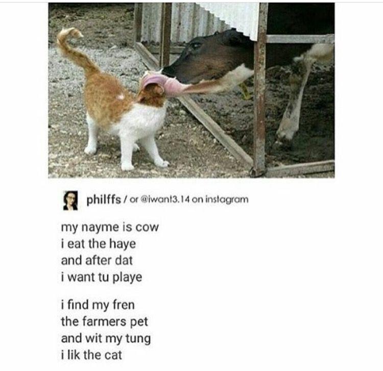 8a6e3ea6fbe9670c0f471c7b4132efa4 pin by morgan🏔 on aes ↦ laugh away pinterest animal, memes