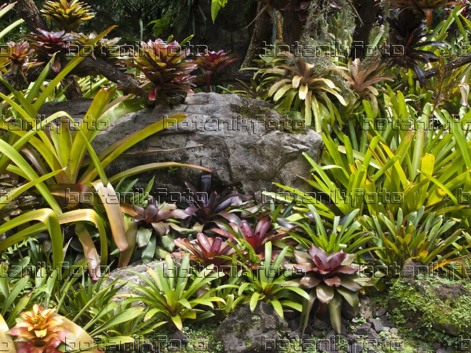 bromeliad garden Image Bromeliad garden, National Orchid