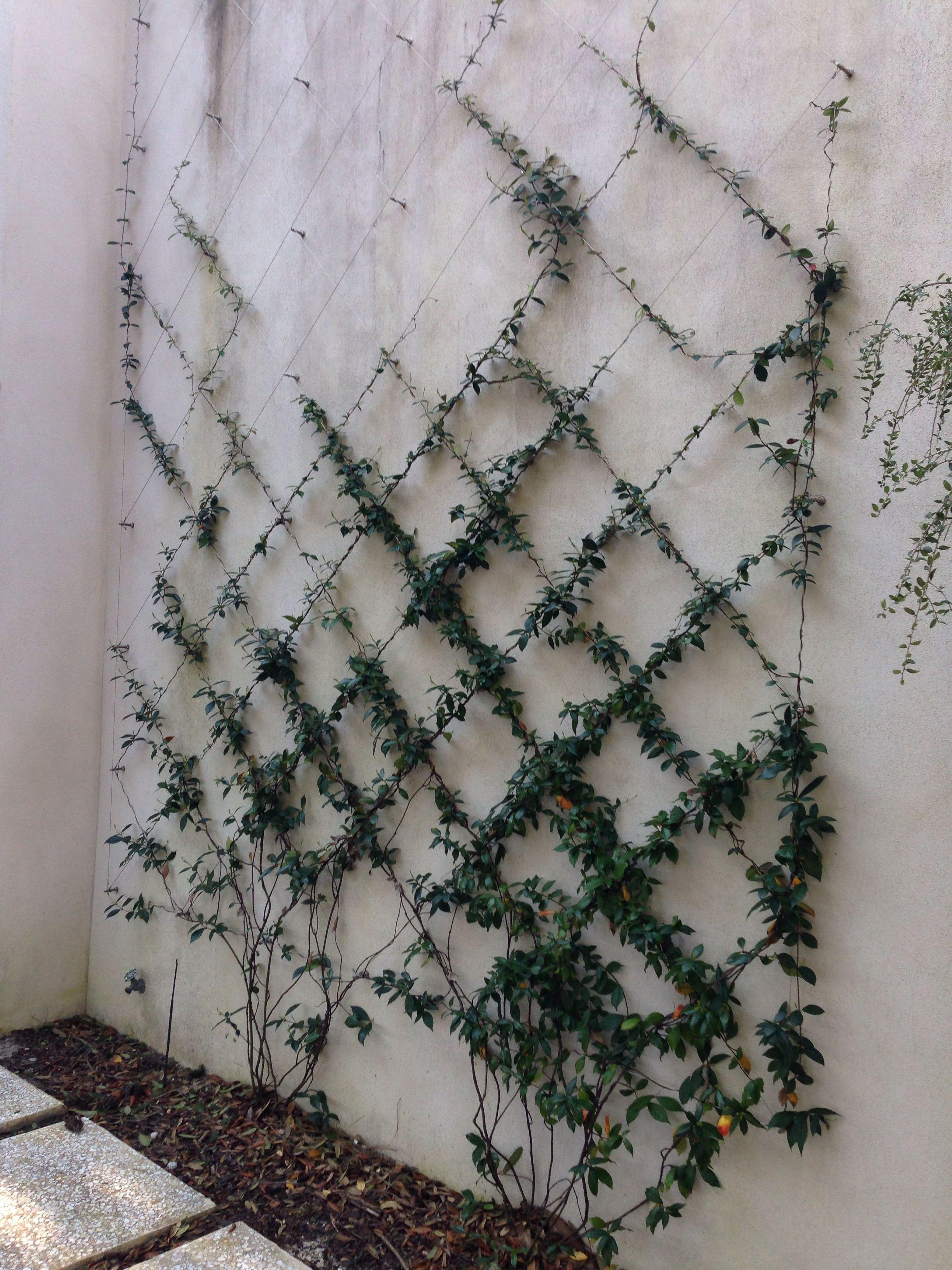 Cable Wire Trellis Water Residence Garden Garden